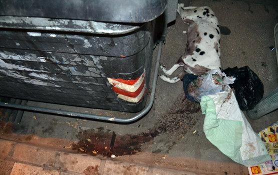 Cadáver de la dálmata que estaba dentro de una maleta en Albacete l periodicoclm.es